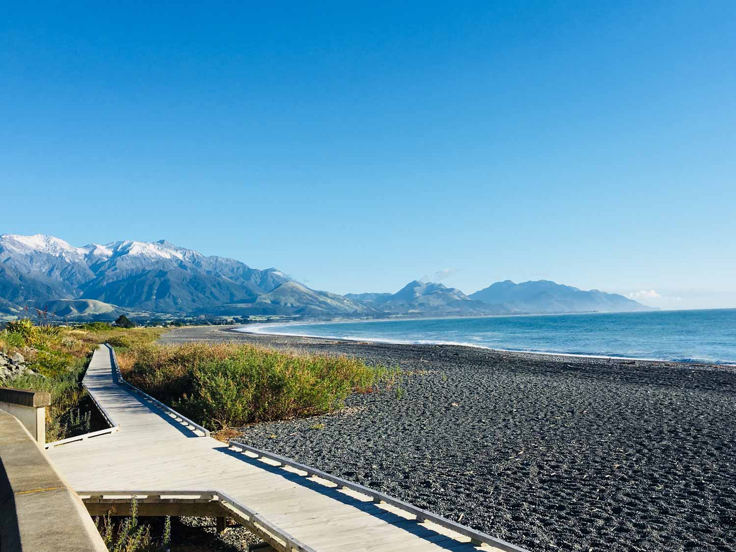 Kaikoura Wildthentic