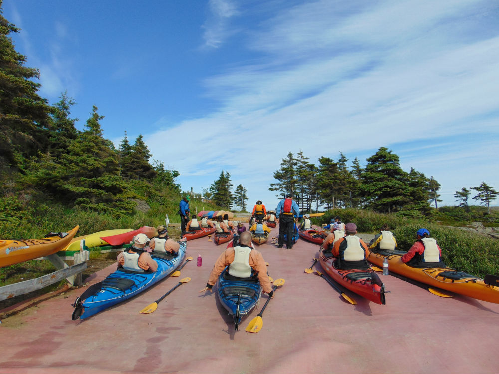 Kayaking With Minke Whales Around Saguenay Fjord Wildthentic